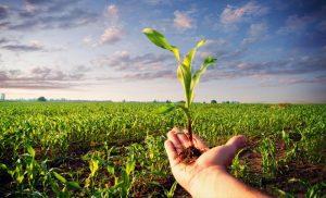 Meollo del problema agrario colombiano